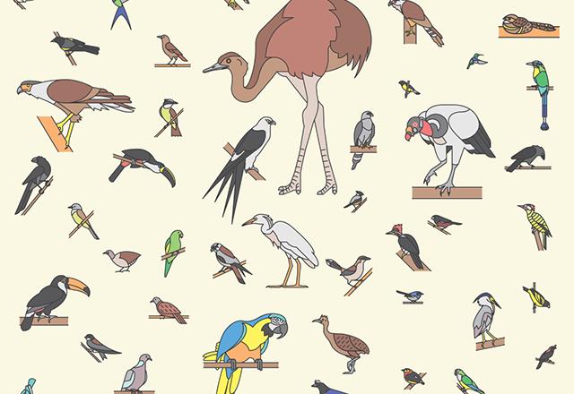 76 Brazilian Birds